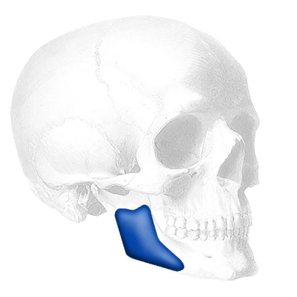 Posterior Mandibular Angle™