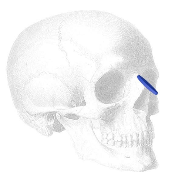 ePTFE Nasal, Rounded